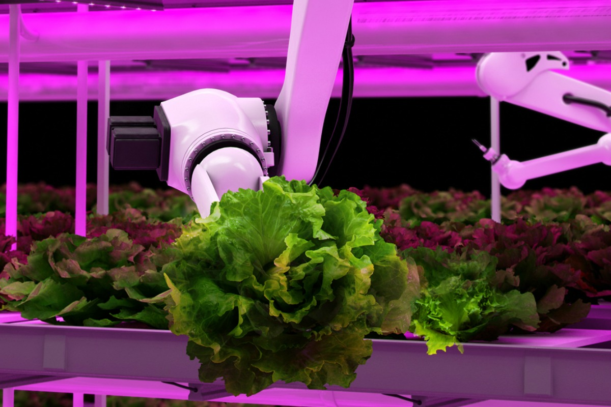 Urban indoor agriculture the answer to an over populated and hungry world?