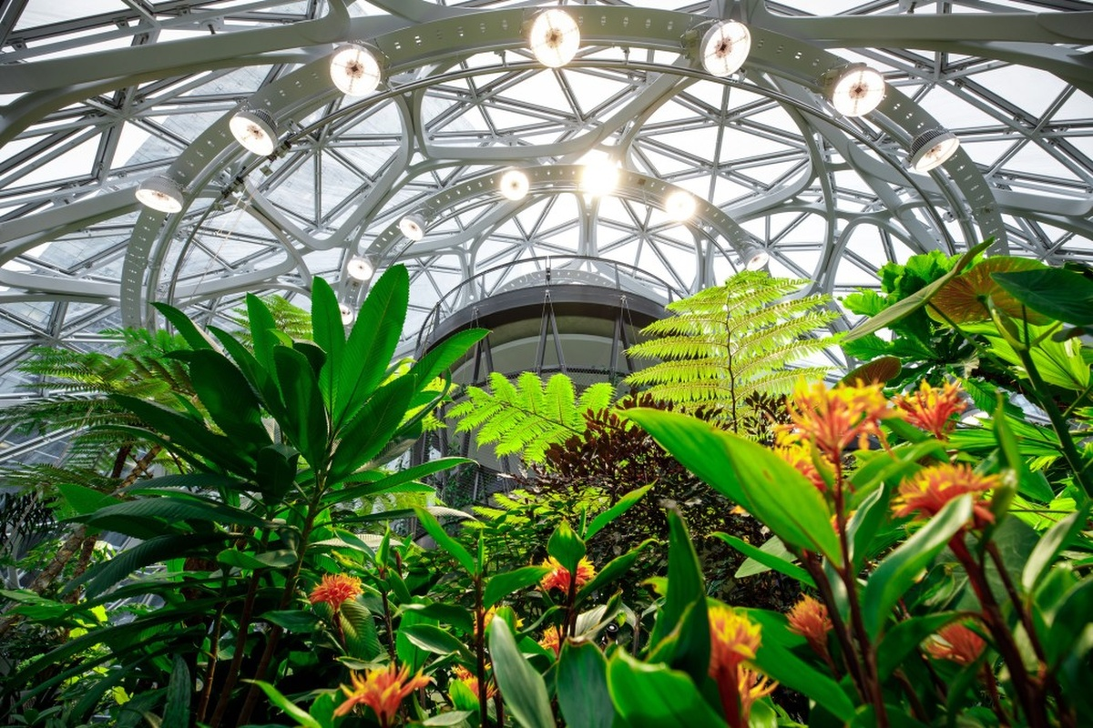 Plants, trees and sunlight take centre stage in The Spheres. Picture: Jordan Stead, Amazon